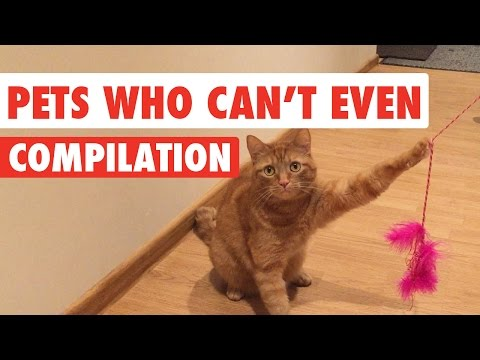 Struggle Bus Pets Video Compilation